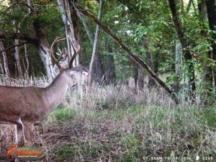 deer hunting property near Greenville