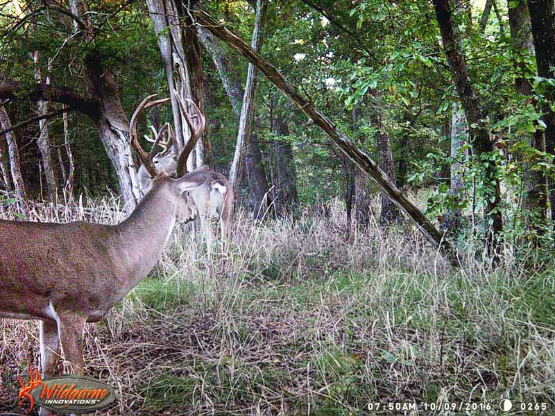 deer hunting property near Greenville