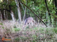hunting property near Dallas or Greenville